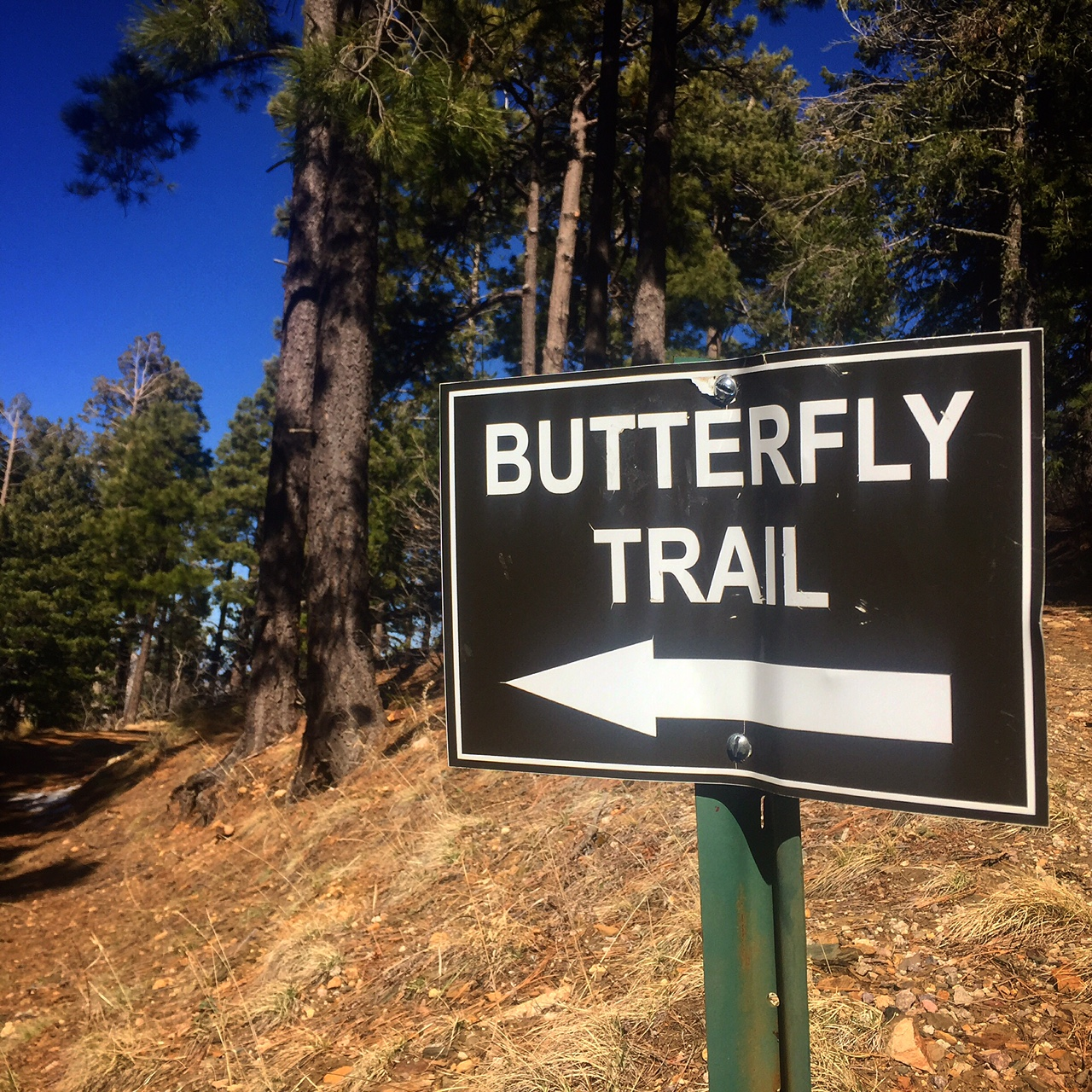 Trail Review: Butterfly Trail to Butterfly Peak - Bookmans ... - photo#46